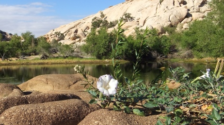 Barker Dam Joshua Tree NP DSCF65501