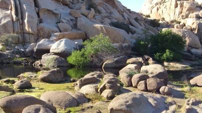 Barker Dam Joshua Tree NP DSCF6559