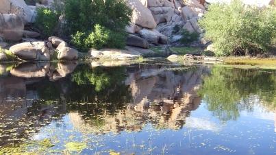 Barker Dam Joshua Tree NP DSCF6561