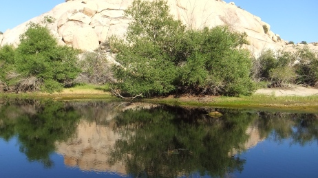 Barker Dam Joshua Tree NP DSCF6572
