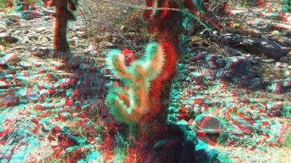 Cholla 20121105 3DA 1080p DSCF5850