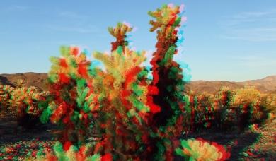 Cholla Garden Joshua Tree NP 3DA 2016p DSCF1007