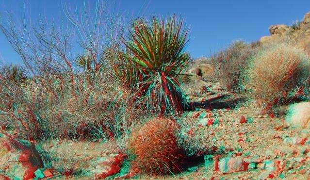 Desert Queen 20130121 3DA 1080p DSCF0234