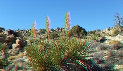 Desert Queen 20130121 3DA 1080p DSCF0250