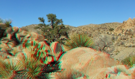 Desert Queen 20130121 3DA 1080p DSCF0261