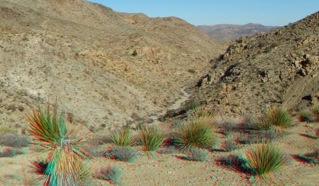 Desert Queen 20130121 3DA 1080p DSCF0270