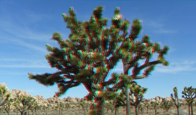 Superbloom 20130401 3DA 1080p DSCF2699