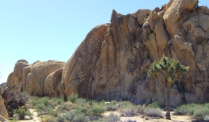 Mustang Ranch, east face
