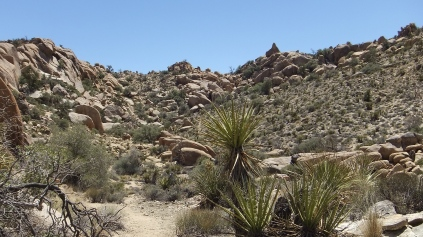 View toward Saddle & Pointed Rock