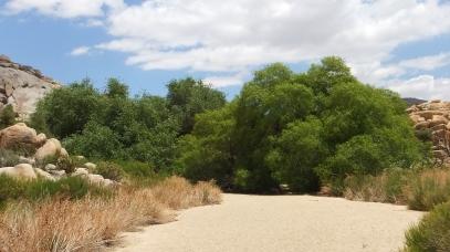 Willow Hole Joshua Tree NP DSCF0142