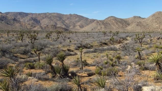 quail-springs-valley-joshua-tree-dscf5268