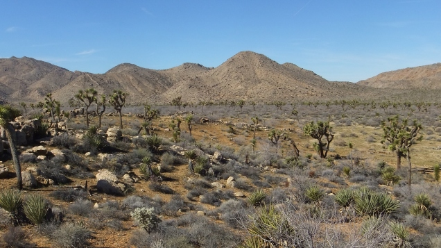 quail-springs-valley-joshua-tree-dscf5274