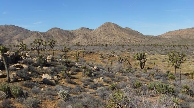 quail-springs-valley-joshua-tree-dscf5274