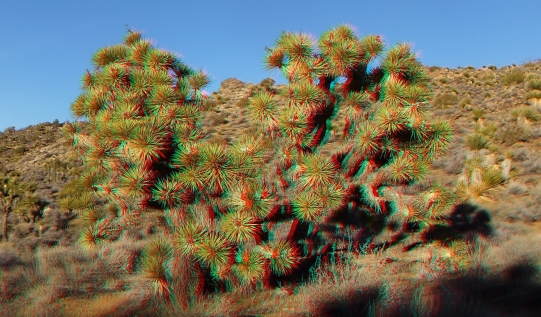 Lost Horse Mine 20140101 3DA 1080p DSCF0469