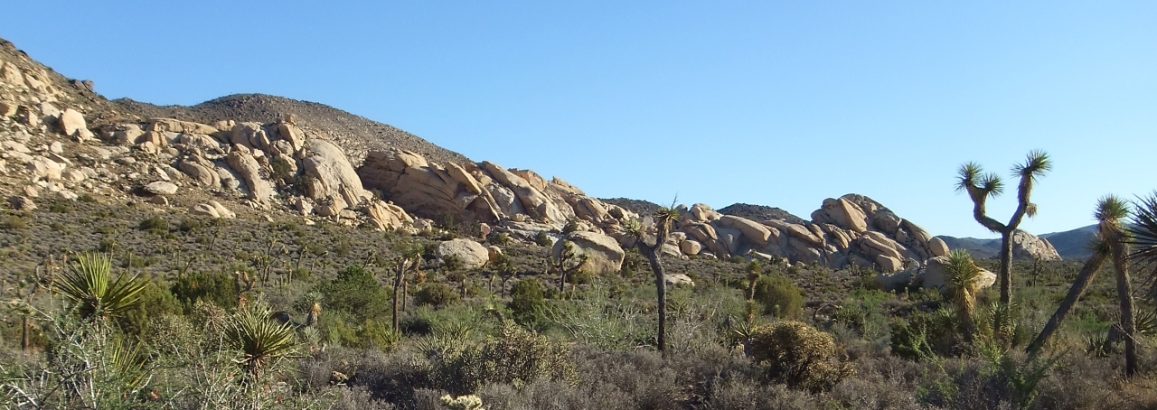 Granite slabs layered like a bed of oysters (viewed from Saddle Rocks trail)
