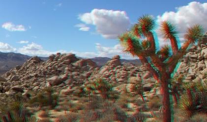 Virgin Islands Joshua Tree 3DA 1080p DSCF1935