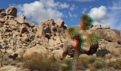 Virgin Islands Joshua Tree 3DA 1080p DSCF2071