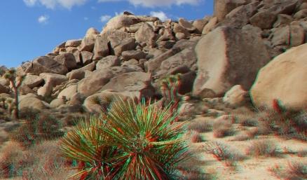 Virgin Islands Joshua Tree 3DA 1080p DSCF2077
