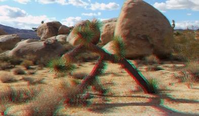 Virgin Islands Joshua Tree 3DA 1080p DSCF2104