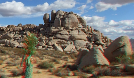 Virgin Islands Joshua Tree 3DA 1080p DSCF2108
