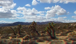 East Virgin Islands Joshua Tree 3DA 1080p DSCF1791