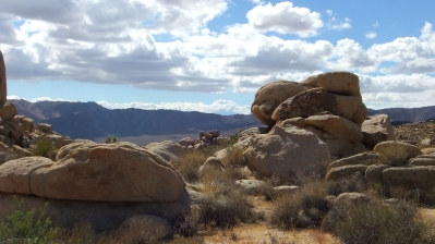 East Virgin Islands Joshua Tree DSCF1840