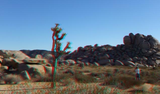 Lechlinski Joshua Tree 3DA 1080p DSCF8173