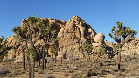 Mount Grossvogel Joshua Tree DSCF7554