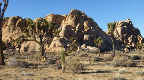 Mount Grossvogel Joshua Tree DSCF7561