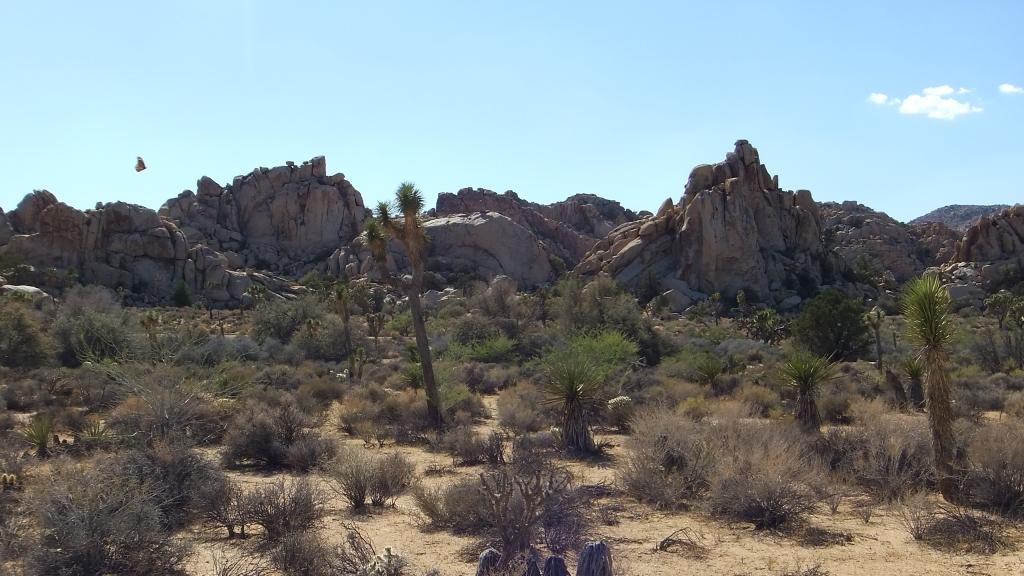 Roadside Rocks Joshua Tree butterfly DSCF2873