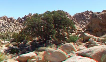super-creeps-area-joshua-tree-np-3da-1080p-dscf4405