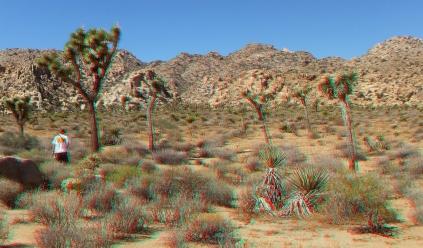 super-creeps-area-joshua-tree-np-3da-1080p-dscf4413