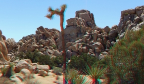 super-creeps-area-joshua-tree-np-3da-1080p-dscf4414
