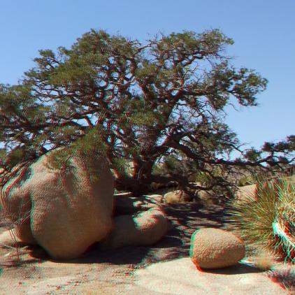 Pine City 3DA 1080p DSCF3943