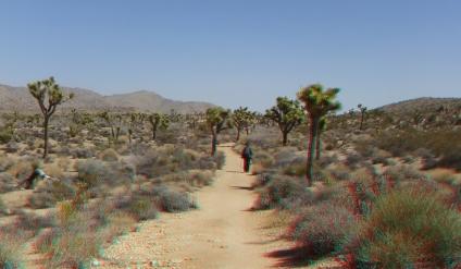 Pine City Trail 3DA 1080p DSCF3529