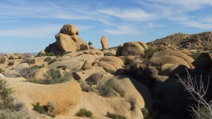 Jumbo Rocks Campground Joshua Tree NP DSCF3401