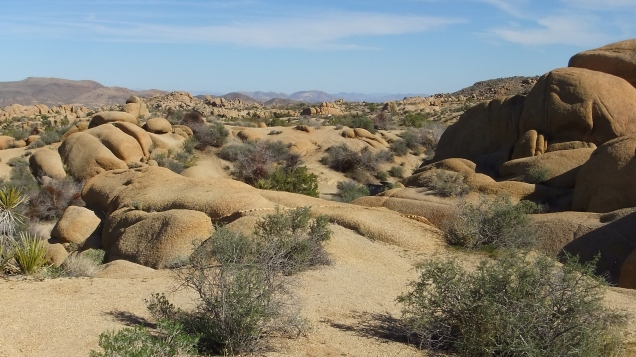 Jumbo Rocks Campground Joshua Tree NP DSCF3412