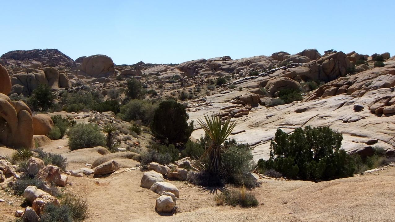 Jumbo Rocks Conans Corridor trail DSCF0801