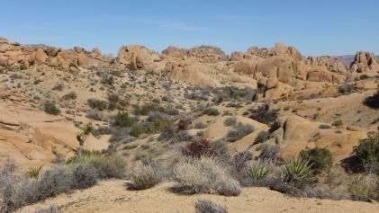 Jumbo Rocks Conans Corridor trail DSCF0817