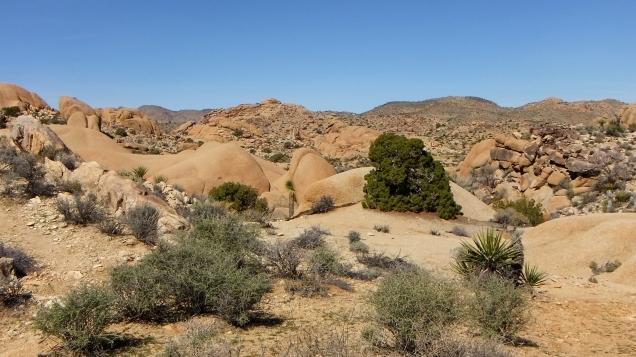 Jumbo Rocks Conans Corridor trail DSCF0835