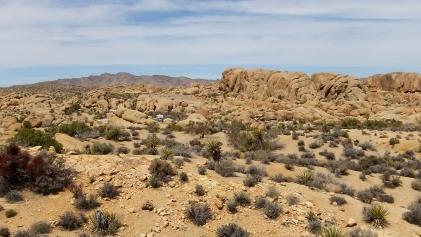 Jumbo Rocks DSCF3075