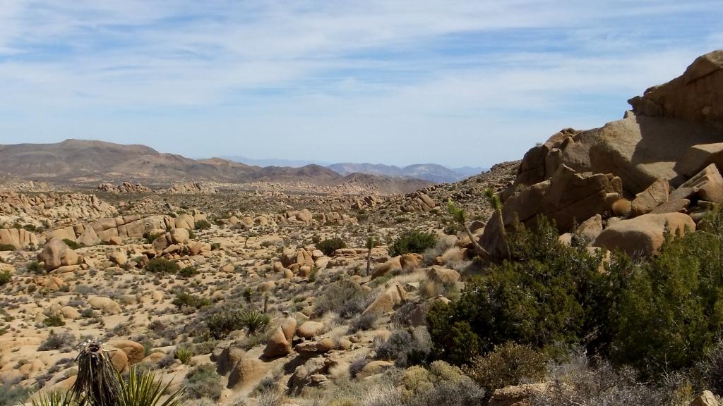 Jumbo Rocks DSCF3120