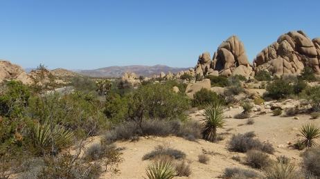 Jumbo Rocks Skull Rock area DSCF0636