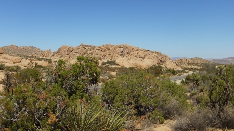 Jumbo Rocks Skull Rock area DSCF0637