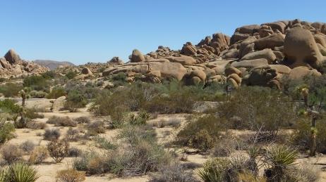 Jumbo Rocks Skull Rock area DSCF0640