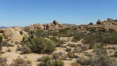 Jumbo Rocks Skull Rock area DSCF0641