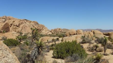 Jumbo Rocks Skull Rock area DSCF0642