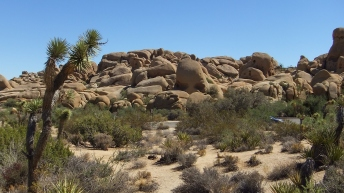 Jumbo Rocks Skull Rock area DSCF0653