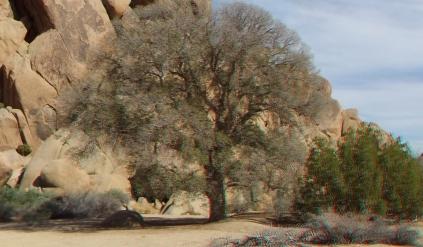 Live Oak Picnic Area 3DA 1080p DSCF3463
