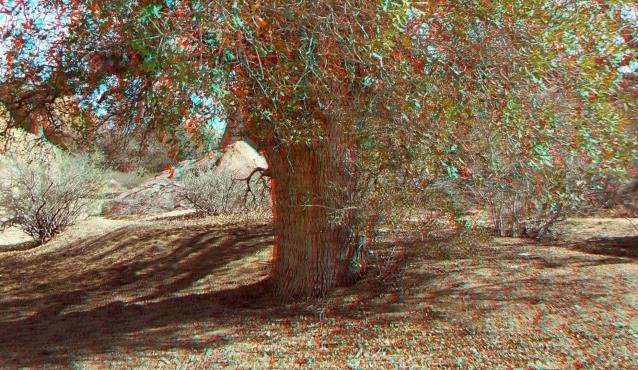 Live Oak Picnic Area 3DA 1080p DSCF3474